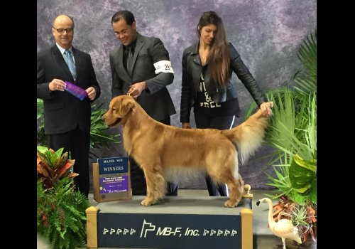 WOP Best Of Breed  3 points Major